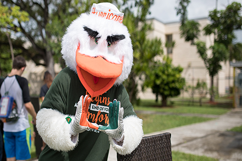A photo of the Sebastian the Ibis. Sebastian is the mascot of the University of Miami.